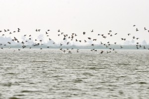 DUPADHAL_BIRD_SANCTUARY_(4)