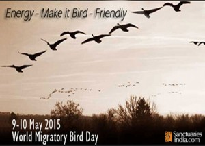 the_2015_world_migratory_bird_day_theme_energy__ma_by_sanctuaryindia-d8sykq3