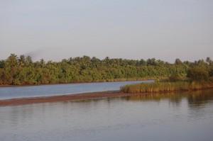 29nandini hoolu near aggidakaliya