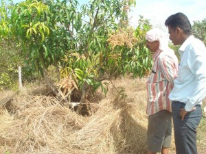 KUMAR BHAGAVAT AND LINGARAJ H INSPECTING A HIDE IN MANDHYALA MADE FOR HUNTING SPOTTED DEER OR ANTILOPE
