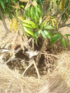 VARIUOS ANGLESOF THE HIDE IN MANDHYALA VILLAGE BUILT FOR HUNTING SPOTTED DEER OR ANTILOPE (3)