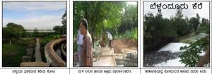 Bellanduru-Kere37